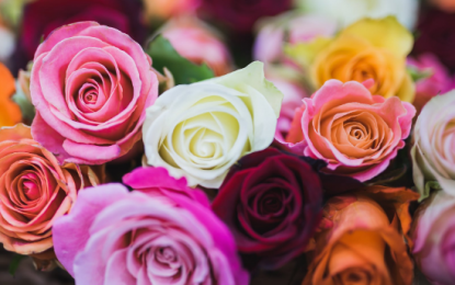 5 Colours of Roses to Celebrate Different Relationships